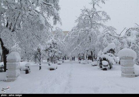 برف کم سابقه در رشت+ عکس
